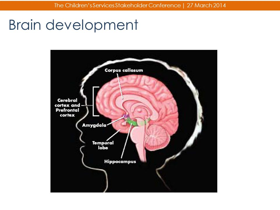 The Children's Services Stakeholder Conference | 27 March 2014 Brain development