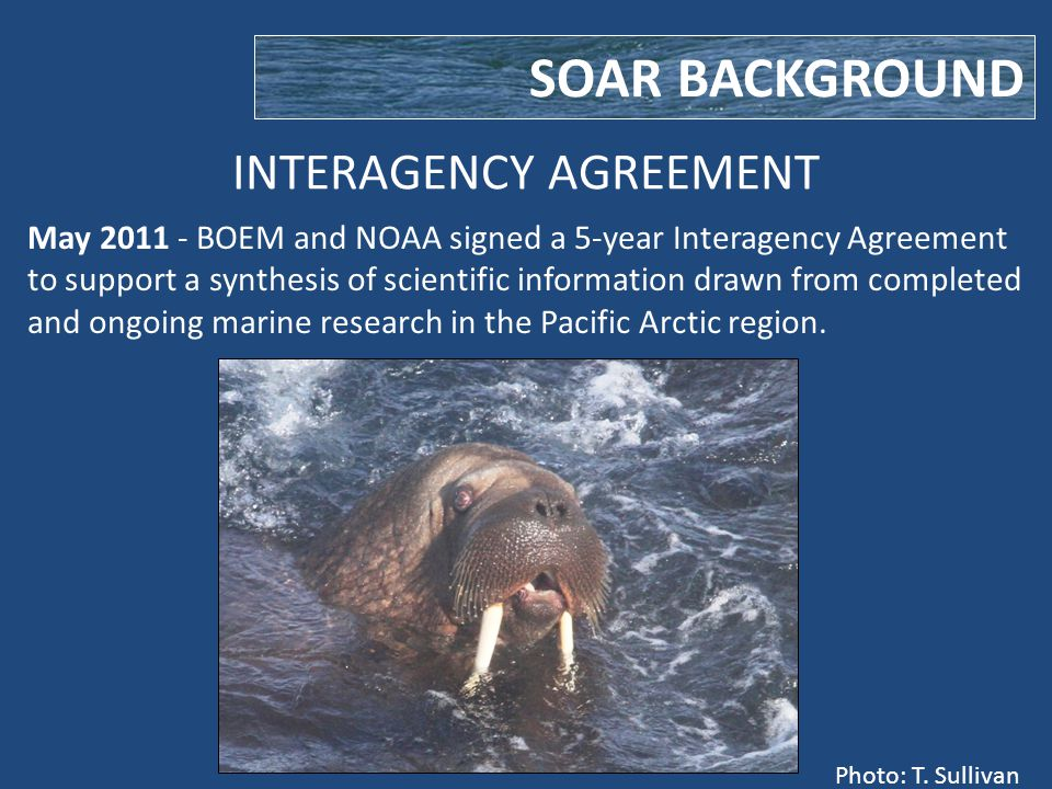 INTERAGENCY AGREEMENT SOAR BACKGROUND May 2011 - BOEM and NOAA signed a 5-year Interagency Agreement to support a synthesis of scientific information drawn from completed and ongoing marine research in the Pacific Arctic region.