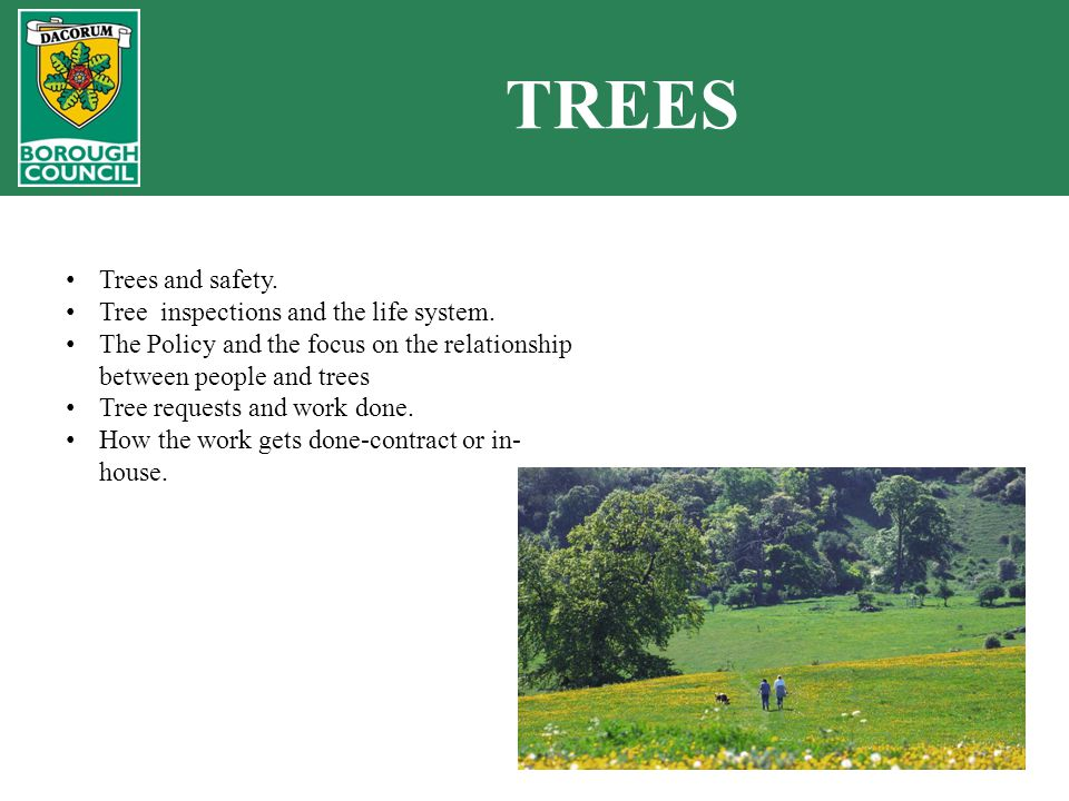 TREES Trees and safety. Tree inspections and the life system.