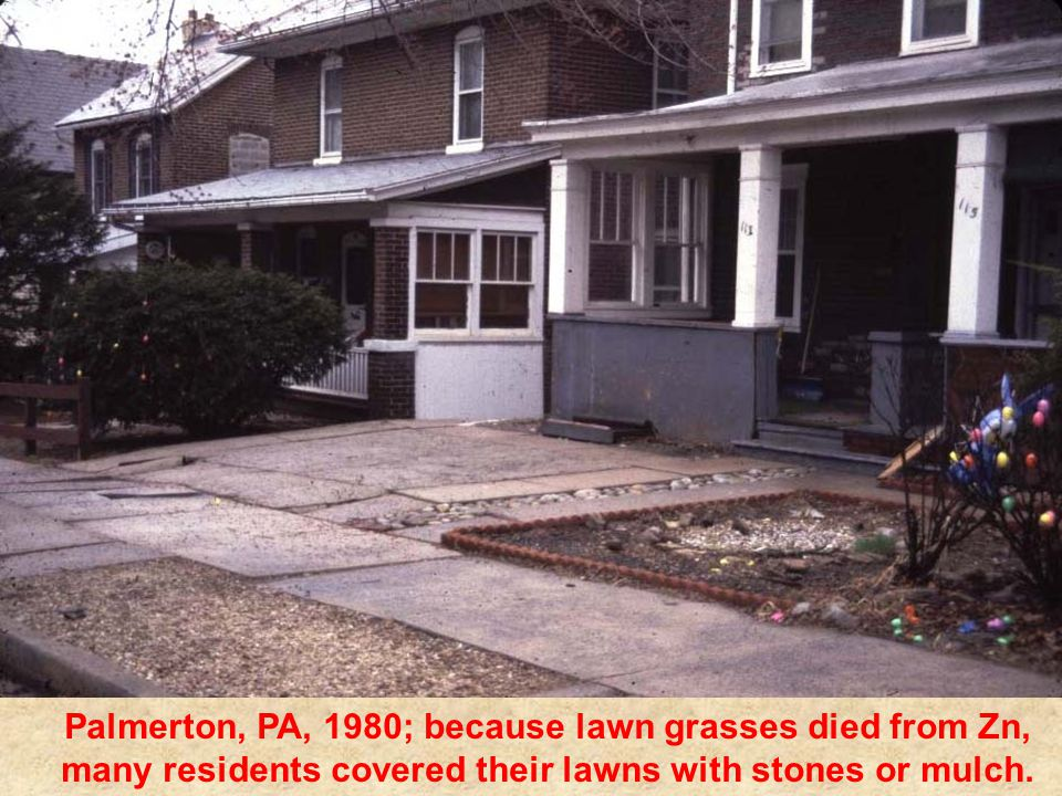 Palmerton, PA, 1980; because lawn grasses died from Zn, many residents covered their lawns with stones or mulch.