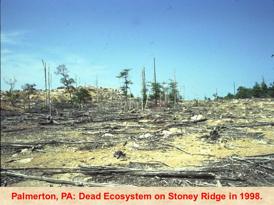 Palmerton, PA: Dead Ecosystem on Stoney Ridge in 1998.
