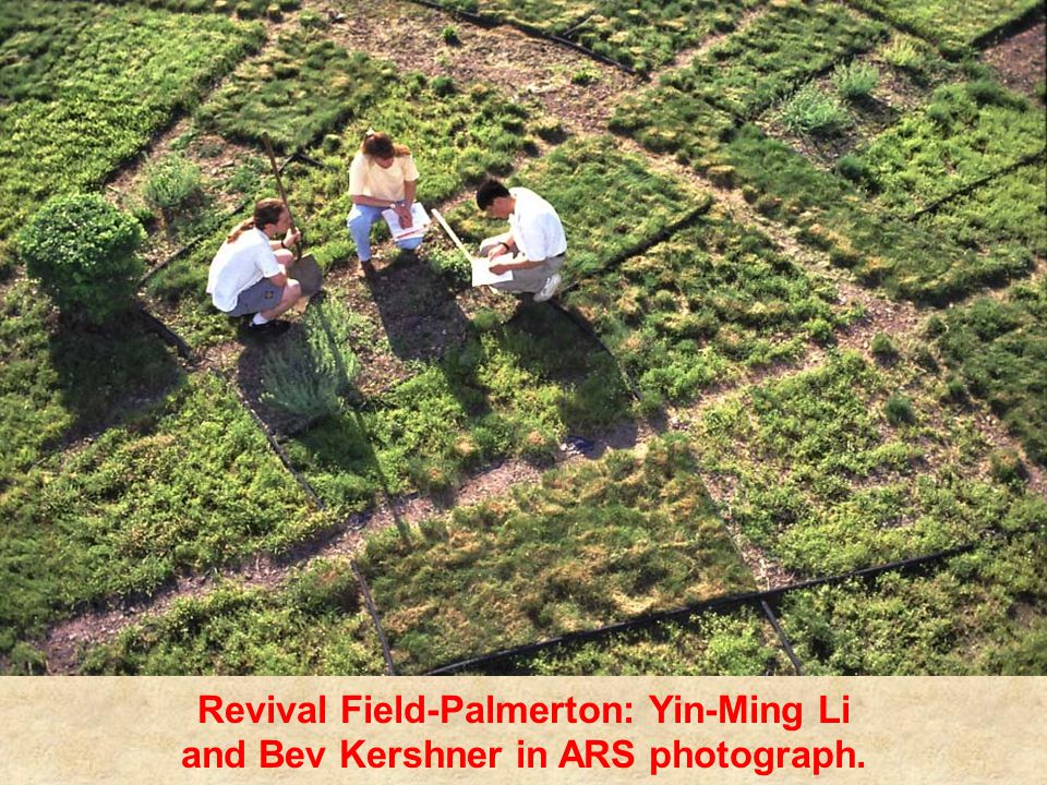Revival Field-Palmerton: Yin-Ming Li and Bev Kershner in ARS photograph.