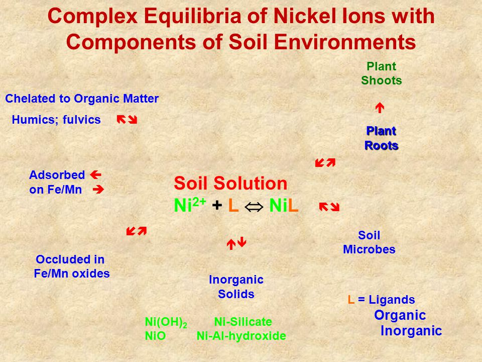 Adsorbed  on Fe/Mn  Occluded in Fe/Mn oxides Chelated to Organic Matter Humics; fulvics   PlantRoots  Soil Microbes Complex Equilibria of Nick