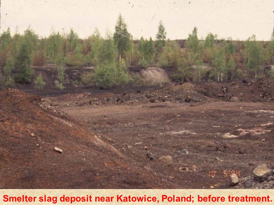 Smelter slag deposit near Katowice, Poland; before treatment.