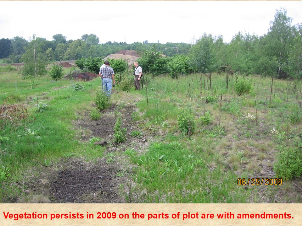 Vegetation persists in 2009 on the parts of plot are with amendments.