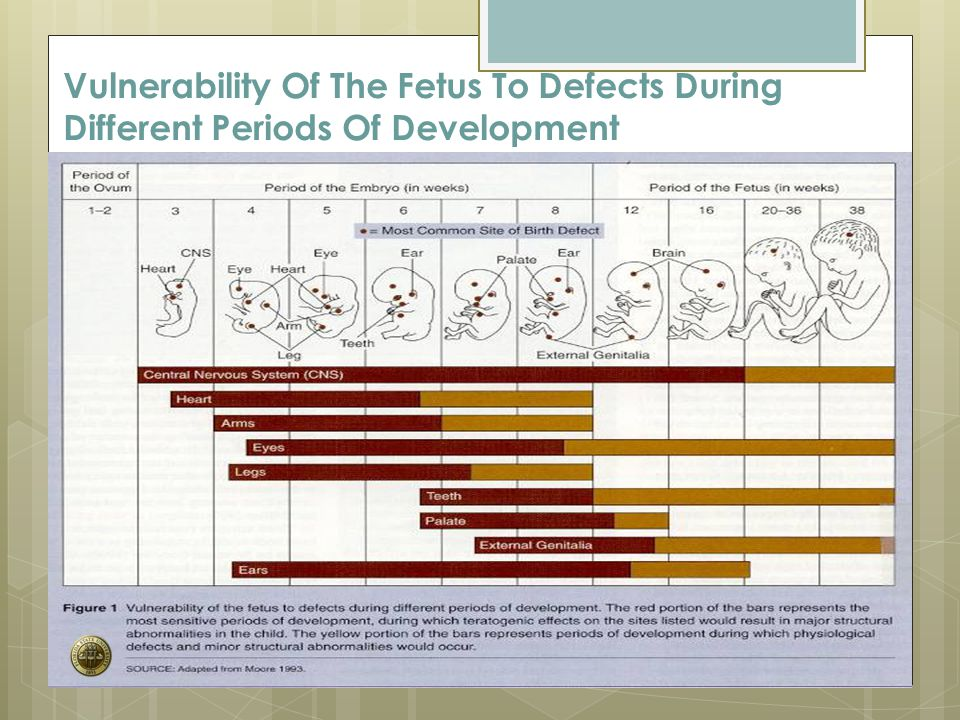 Vulnerability Of The Fetus To Defects During Different Periods Of Development