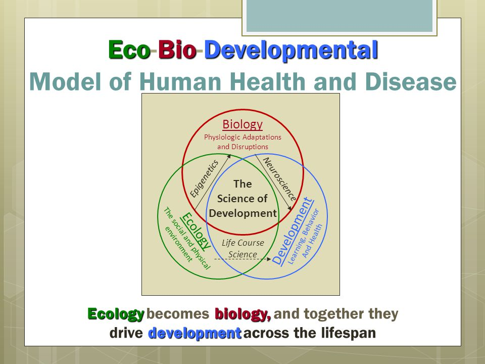 EcoBioDevelopmental Eco-Bio-Developmental Model of Human Health and Disease Biology Physiologic Adaptations and Disruptions Ecology The social and physical environment Development Learning, Behavior And Health Life Course Science Neuroscience Epigenetics The Science of Development Ecology becomes biology, and together they development drive development across the lifespan