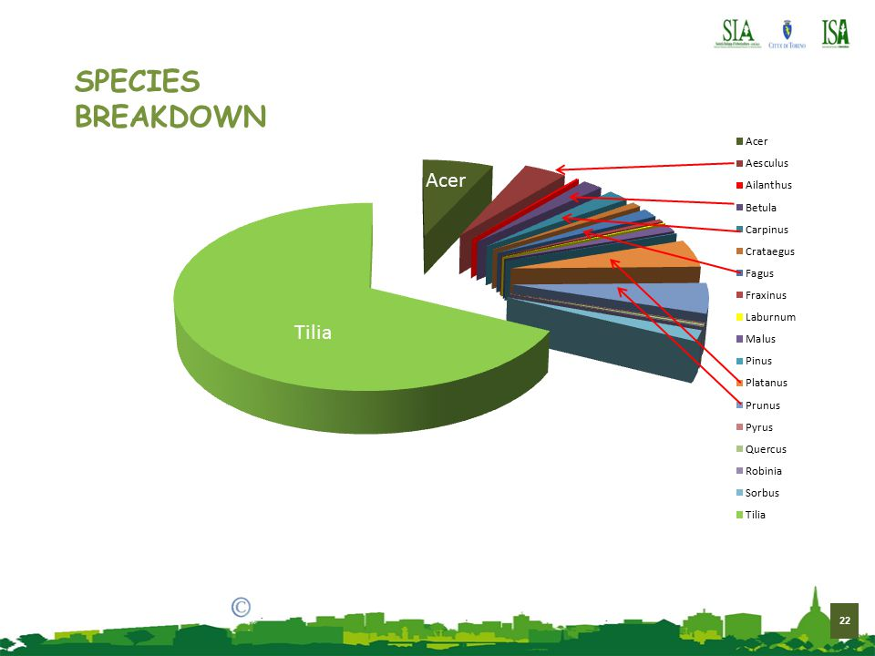 22 brian g. crane 2014 Tilia Acer SPECIES BREAKDOWN
