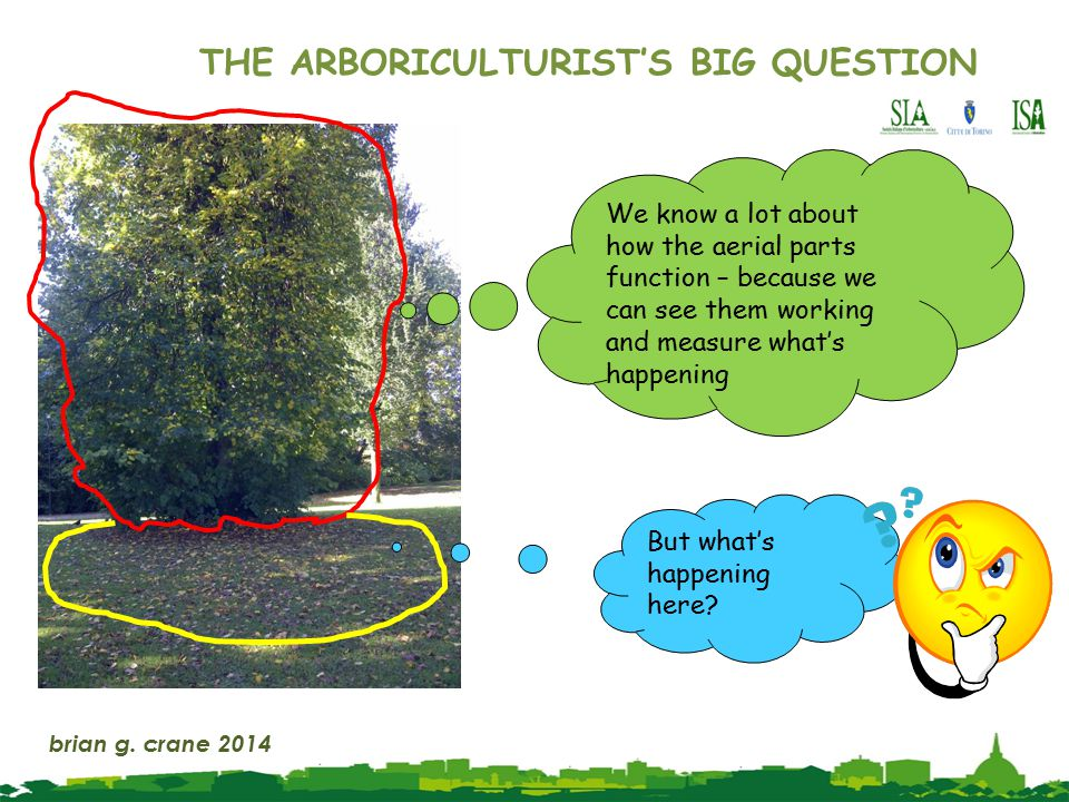 THE ARBORICULTURIST'S BIG QUESTION But what's happening here.