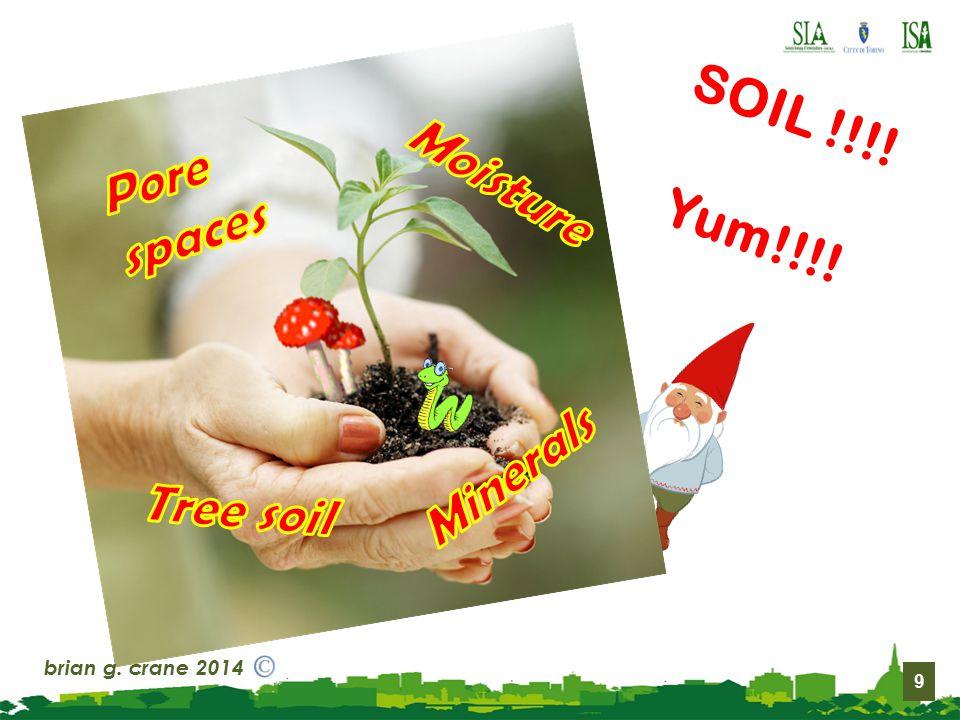 9 SOIL !!!! Yum!!!! brian g. crane 2014
