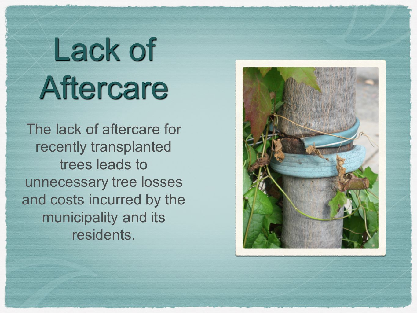 Lack of Aftercare The lack of aftercare for recently transplanted trees leads to unnecessary tree losses and costs incurred by the municipality and its residents.
