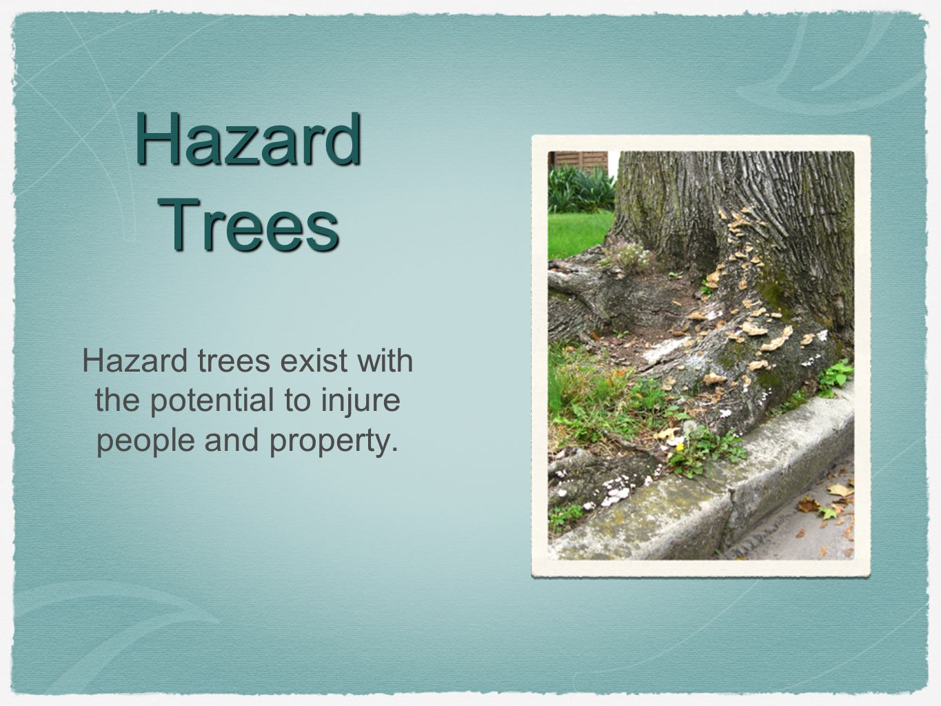 Hazard Trees Hazard trees exist with the potential to injure people and property.