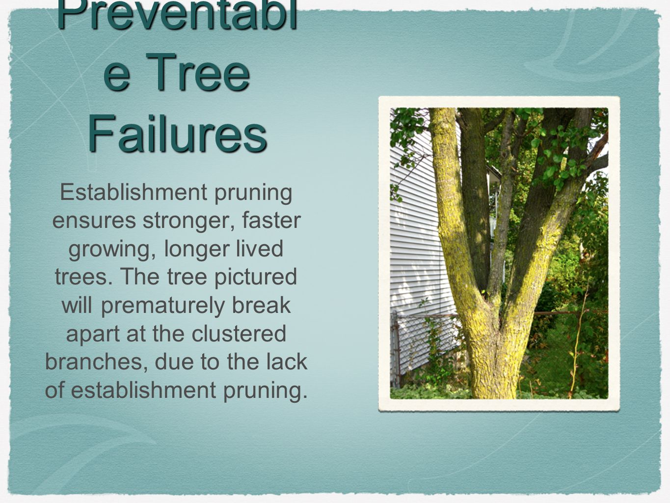 Preventabl e Tree Failures Establishment pruning ensures stronger, faster growing, longer lived trees.