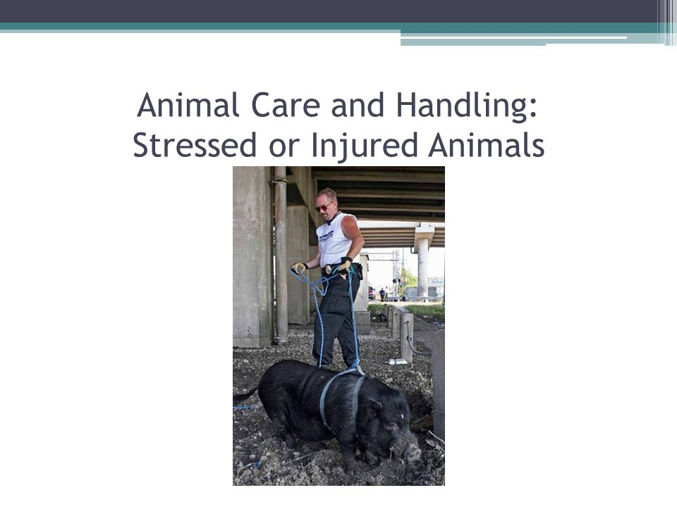 Common Veterinary Drugs Used During Disaster External and Internal Parasite Treatment ▫Ectoparaciticides and Anthelmintics ▫Flea, tick, and worm coverage  Spot-on, injectible, and oral formulations