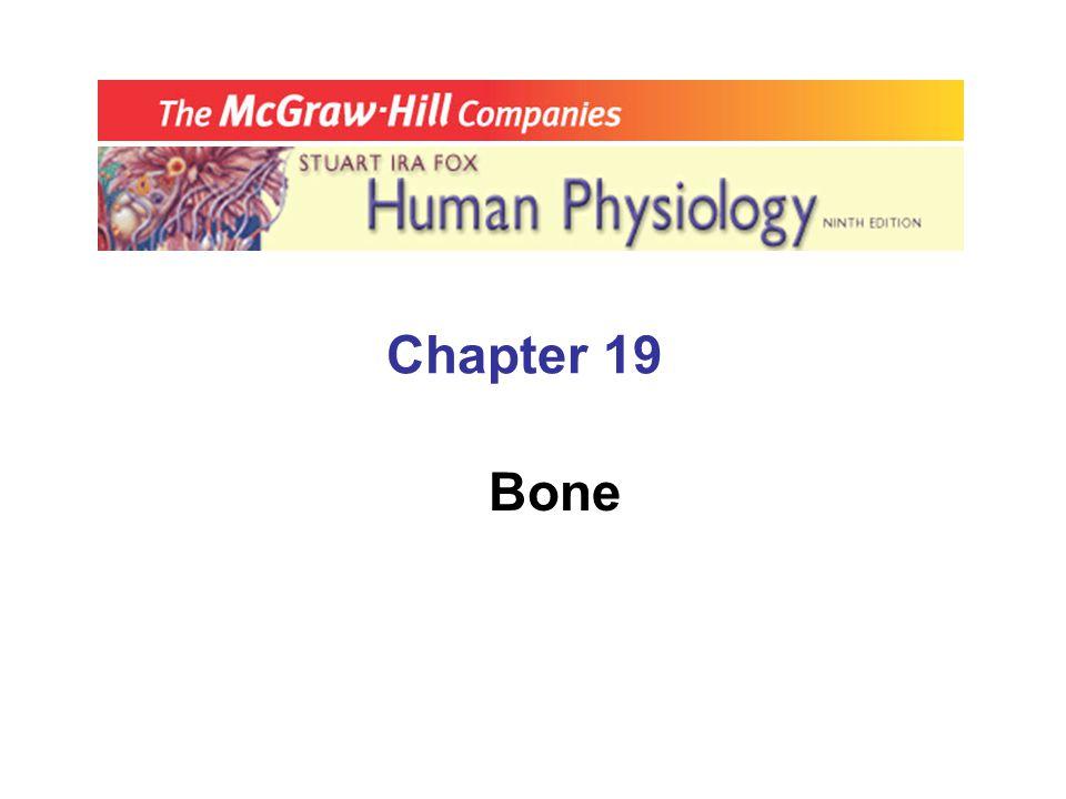 Chapter 19 Bone
