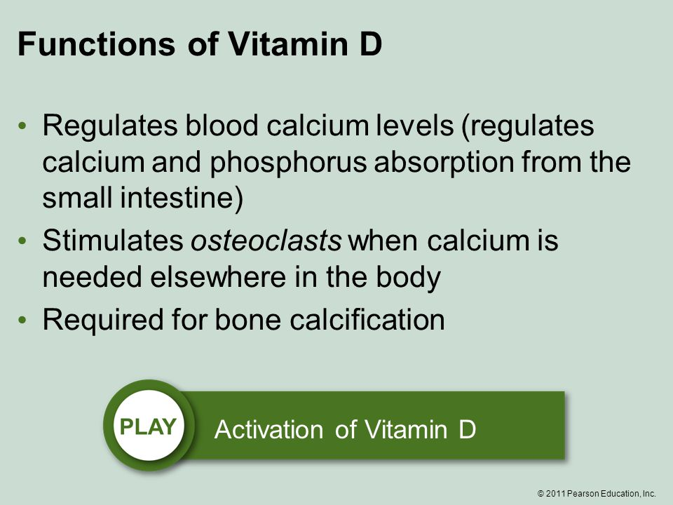 Functions of Vitamin D Regulates blood calcium levels (regulates calcium and phosphorus absorption from the small intestine) Stimulates osteoclasts when calcium is needed elsewhere in the body Required for bone calcification Activation of Vitamin D