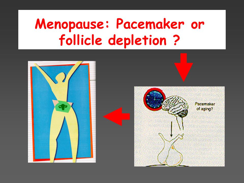 Menopause: Pacemaker or follicle depletion ?