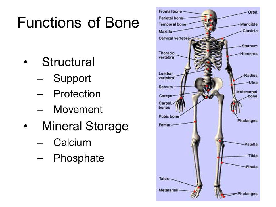 Skeletal Problems Disease / genetics –Osteoporosis (Type I) –Multiple myeloma –Metastatic bone cancer –Rheumatoid arthritis –Paget's Disease Hormone ablative therapy Spinal cord or nerve injury Surgery and rehabilitation Aging (Type II Osteoporosis) Bedrest Microgravity