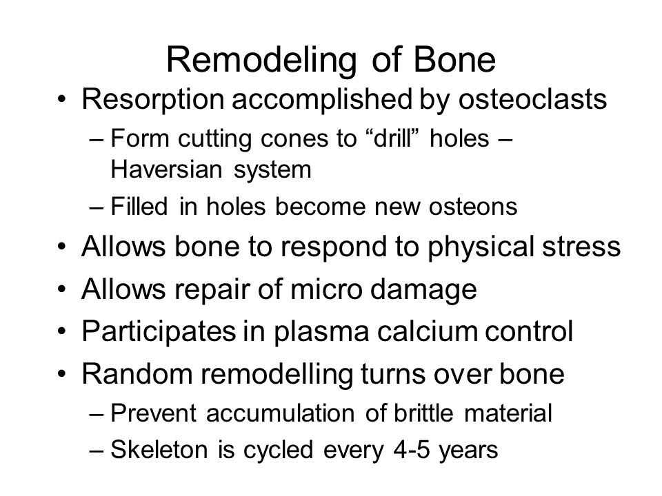 Remodeling of Bone Resorption accomplished by osteoclasts –Form cutting cones to drill holes – Haversian system –Filled in holes become new osteons Allows bone to respond to physical stress Allows repair of micro damage Participates in plasma calcium control Random remodelling turns over bone –Prevent accumulation of brittle material –Skeleton is cycled every 4-5 years