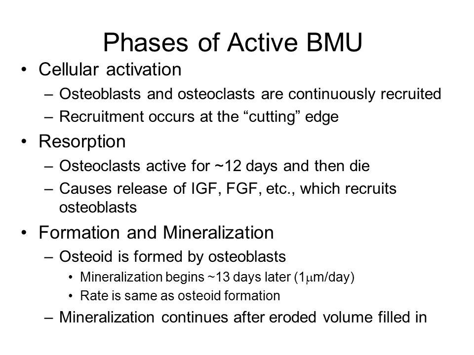 Phases of Active BMU Cellular activation –Osteoblasts and osteoclasts are continuously recruited –Recruitment occurs at the cutting edge Resorption –Osteoclasts active for ~12 days and then die –Causes release of IGF, FGF, etc., which recruits osteoblasts Formation and Mineralization –Osteoid is formed by osteoblasts Mineralization begins ~13 days later (1  m/day) Rate is same as osteoid formation –Mineralization continues after eroded volume filled in