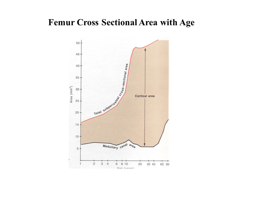 Femur Cross Sectional Area with Age