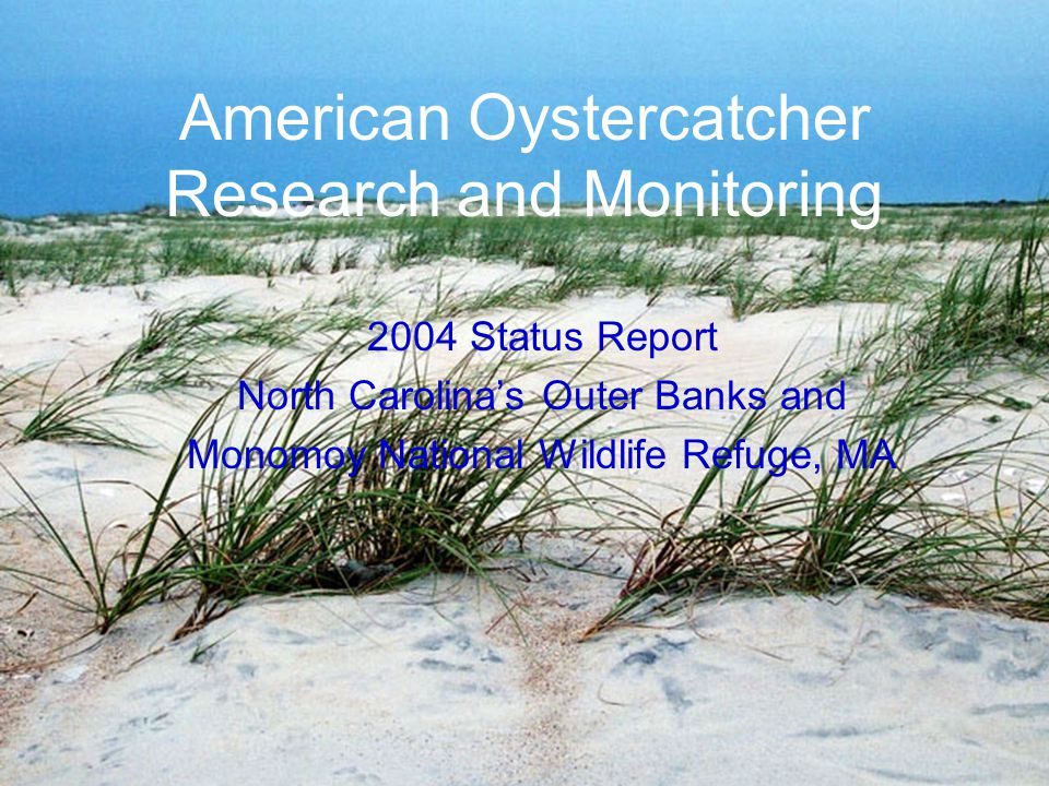 American Oystercatcher Research and Monitoring 2004 Status Report North Carolina's Outer Banks and Monomoy National Wildlife Refuge, MA
