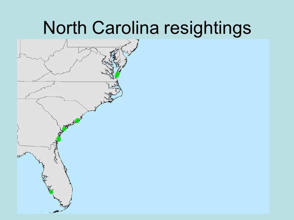 North Carolina resightings