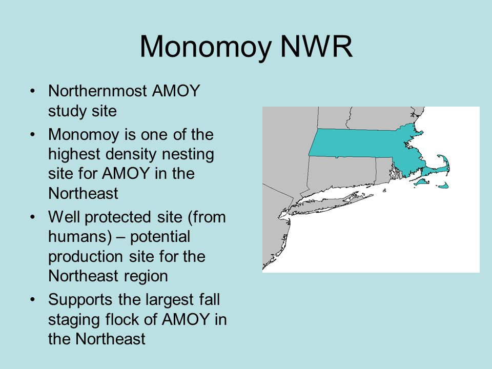 Monomoy NWR Northernmost AMOY study site Monomoy is one of the highest density nesting site for AMOY in the Northeast Well protected site (from humans