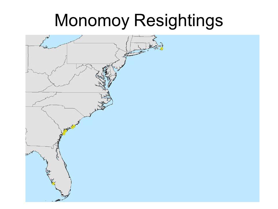 Monomoy Resightings