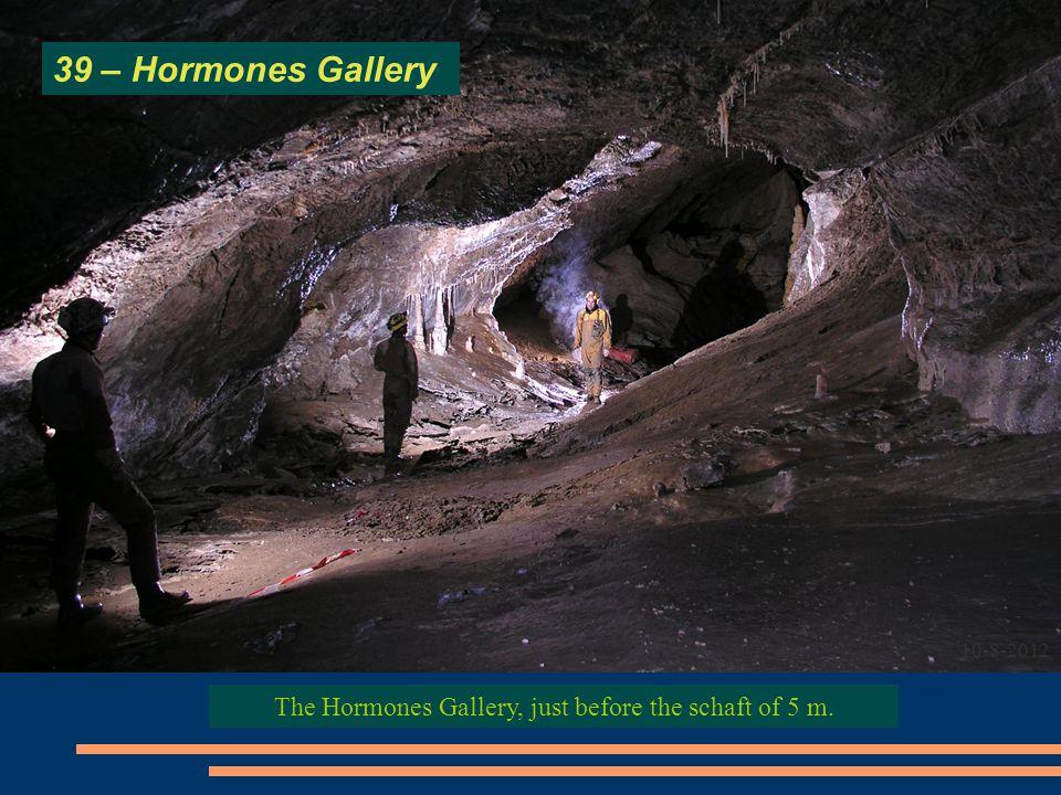 The Hormones Gallery, just before the schaft of 5 m. 39 – Hormones Gallery