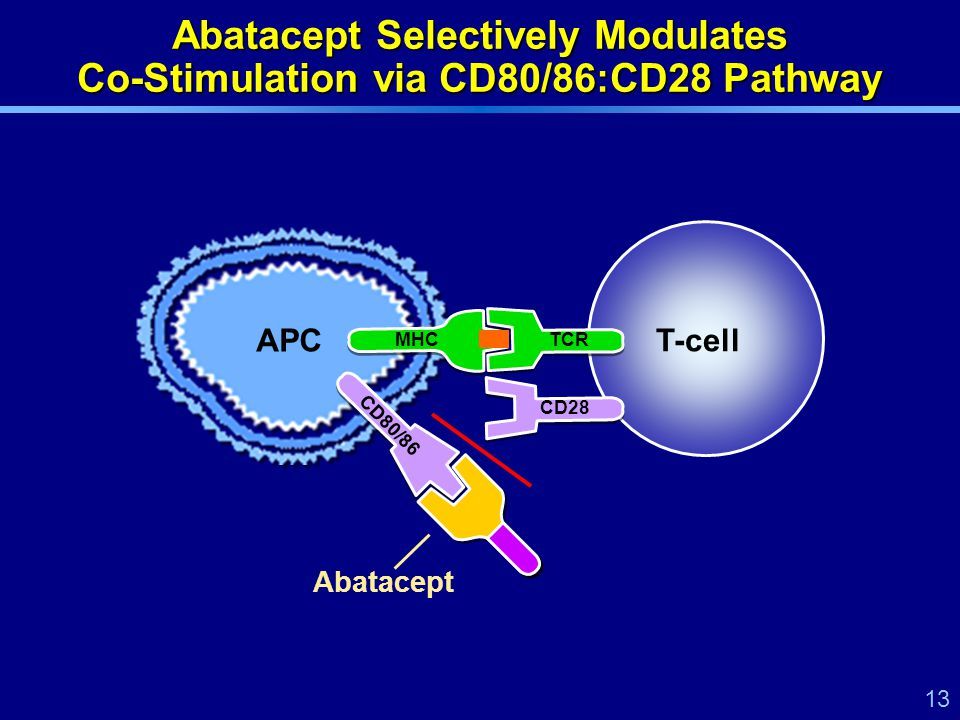 13 Abatacept Selectively Modulates Co-Stimulation via CD80/86:CD28 Pathway APC Abatacept MHCTCR CD80/86 CD28 T-cell