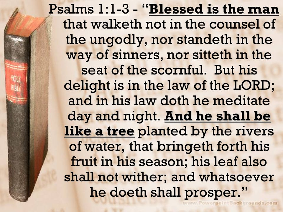 """And he shall be like a tree Psalms 1:1-3 - """"Blessed is the man that walketh not in the counsel of the ungodly, nor standeth in the way of sinners, nor"""