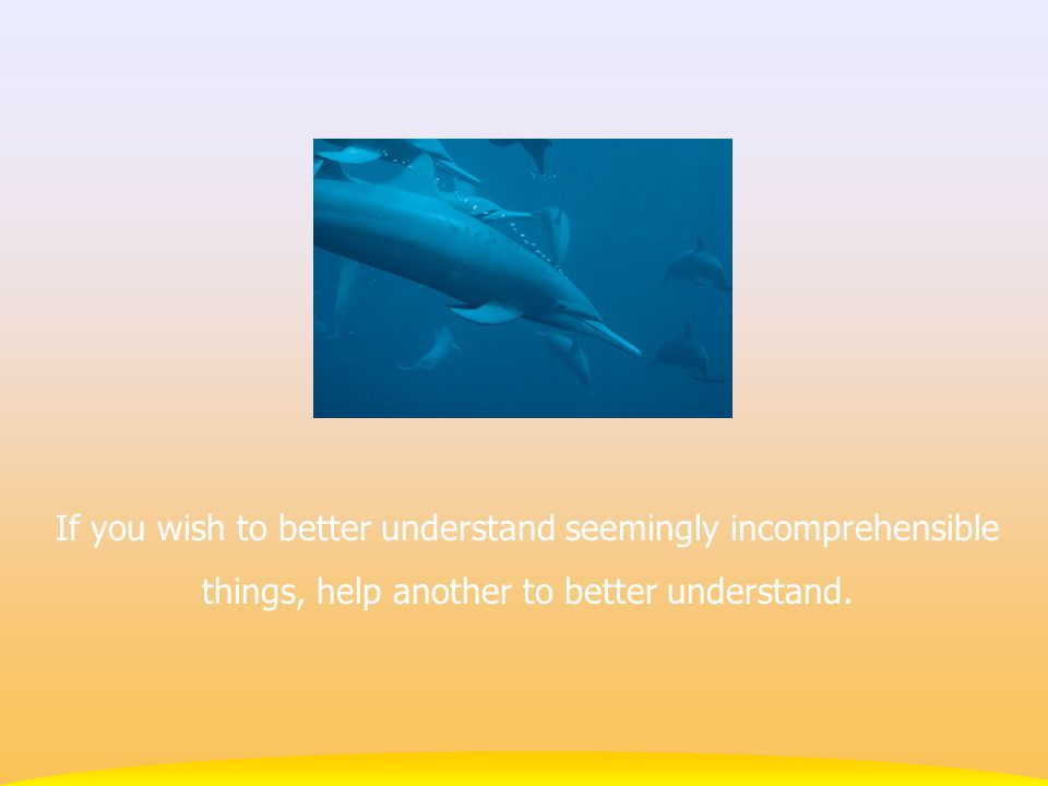 If you wish to better understand seemingly incomprehensible things, help another to better understand.