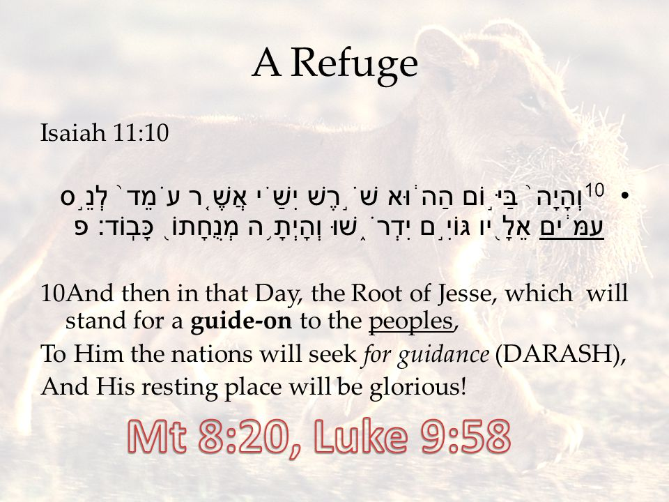 A Refuge Isaiah 11:10 10 וְהָיָה ֙ בַּיּ ֣ וֹם הַה ֔ וּא שֹׁ ֣ רֶשׁ יִשַׁ ֗ י אֲשֶׁ ֤ ר עֹמֵד ֙ לְנֵ ֣ ס עַמִּ ֔ ים אֵלָ ֖ יו גּוֹיִ ֣ ם יִדְרֹ ֑ שׁוּ וְהָיְתָ ֥ ה מְנֻחָתוֹ ֖ כָּבֽוֹד׃ פ 10And then in that Day, the Root of Jesse, which will stand for a guide-on to the peoples, To Him the nations will seek for guidance (DARASH), And His resting place will be glorious!