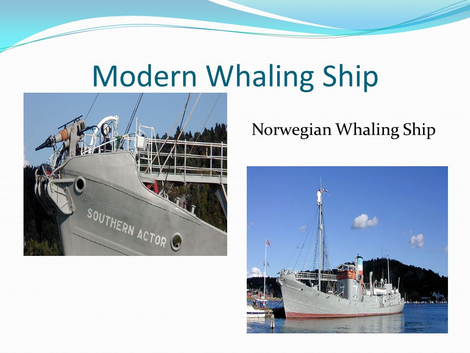 Modern Industry Whales mainly hunted today in Japan and Norway for their meat, bones, and baleen Largest market for Minke Whales