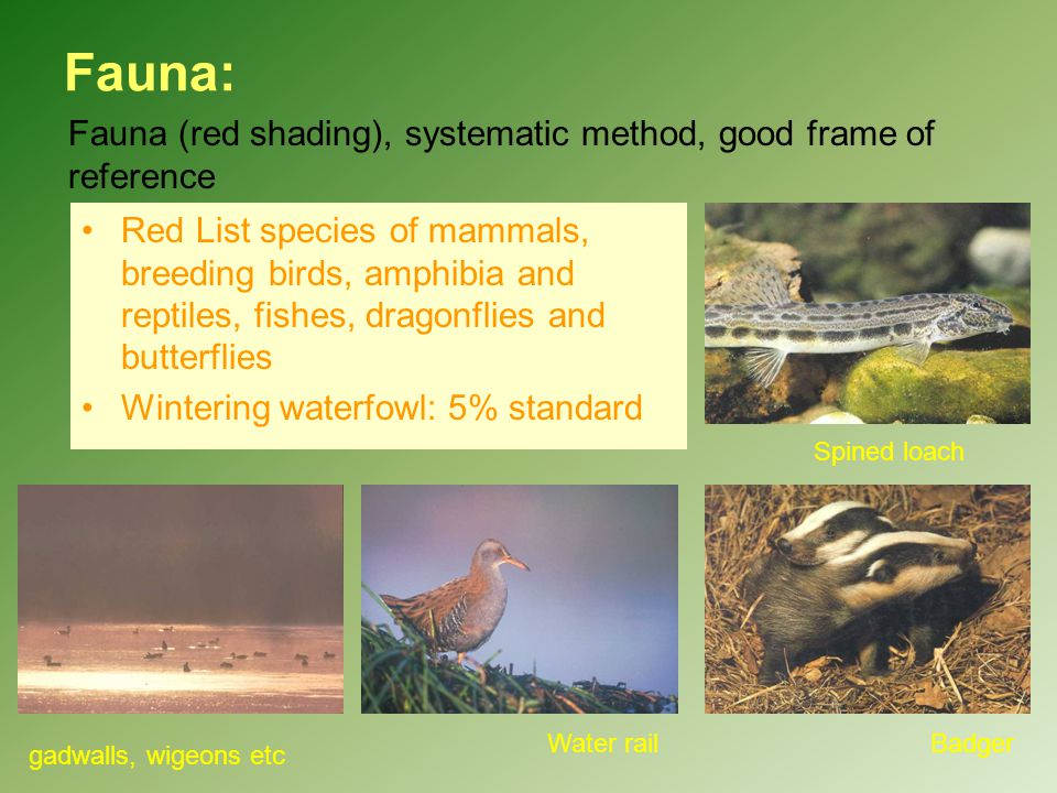 Fauna: Fauna (red shading), systematic method, good frame of reference Red List species of mammals, breeding birds, amphibia and reptiles, fishes, dra
