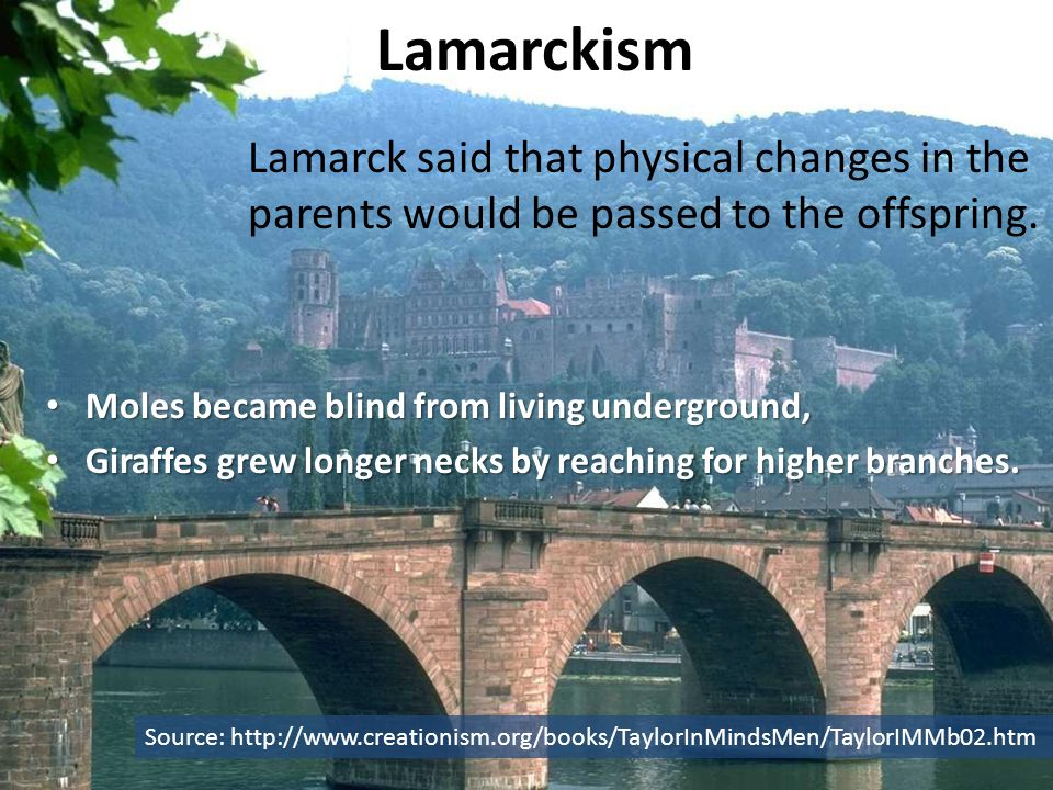 Lamarckism Moles became blind from living underground, Moles became blind from living underground, Giraffes grew longer necks by reaching for higher branches.