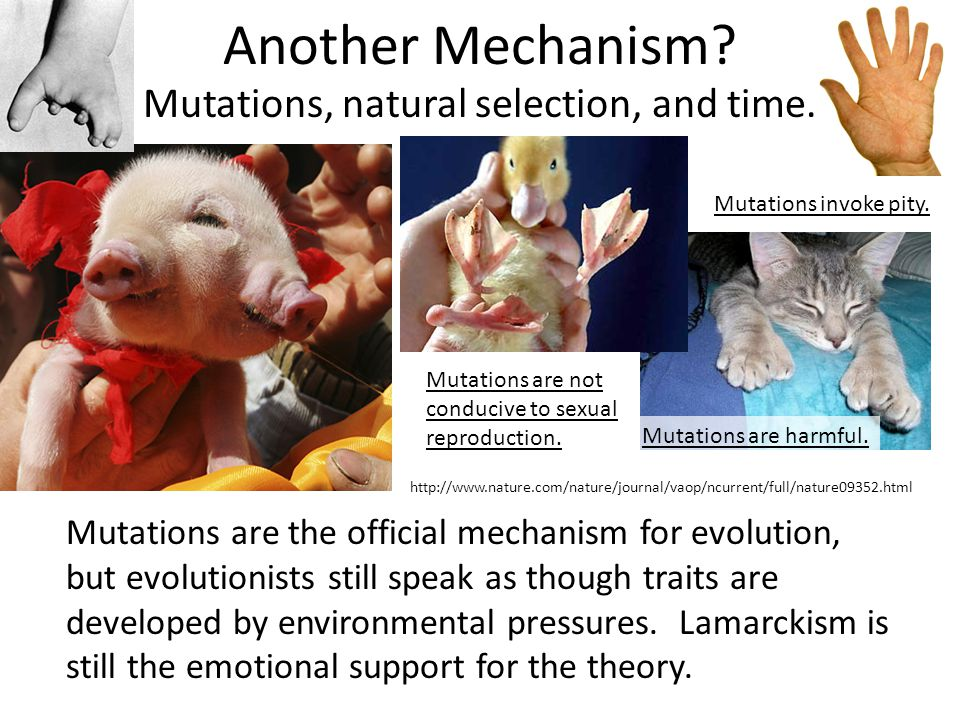 Another Mechanism. Mutations, natural selection, and time.