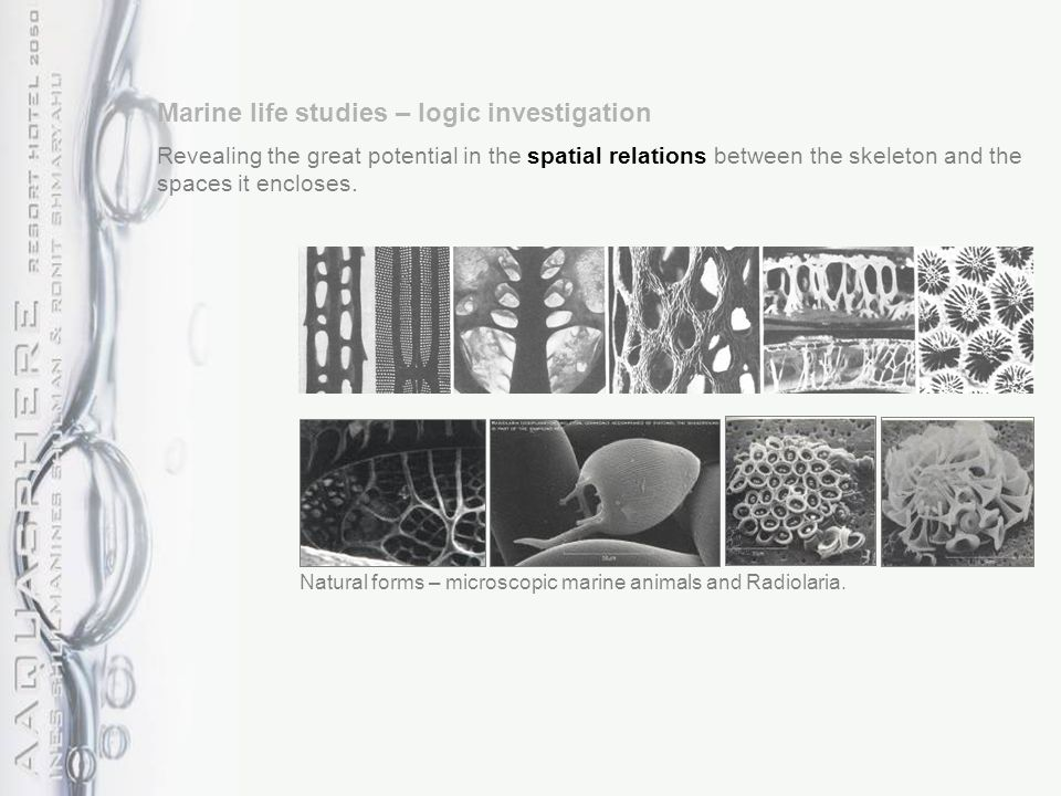 Natural forms – microscopic marine animals and Radiolaria.