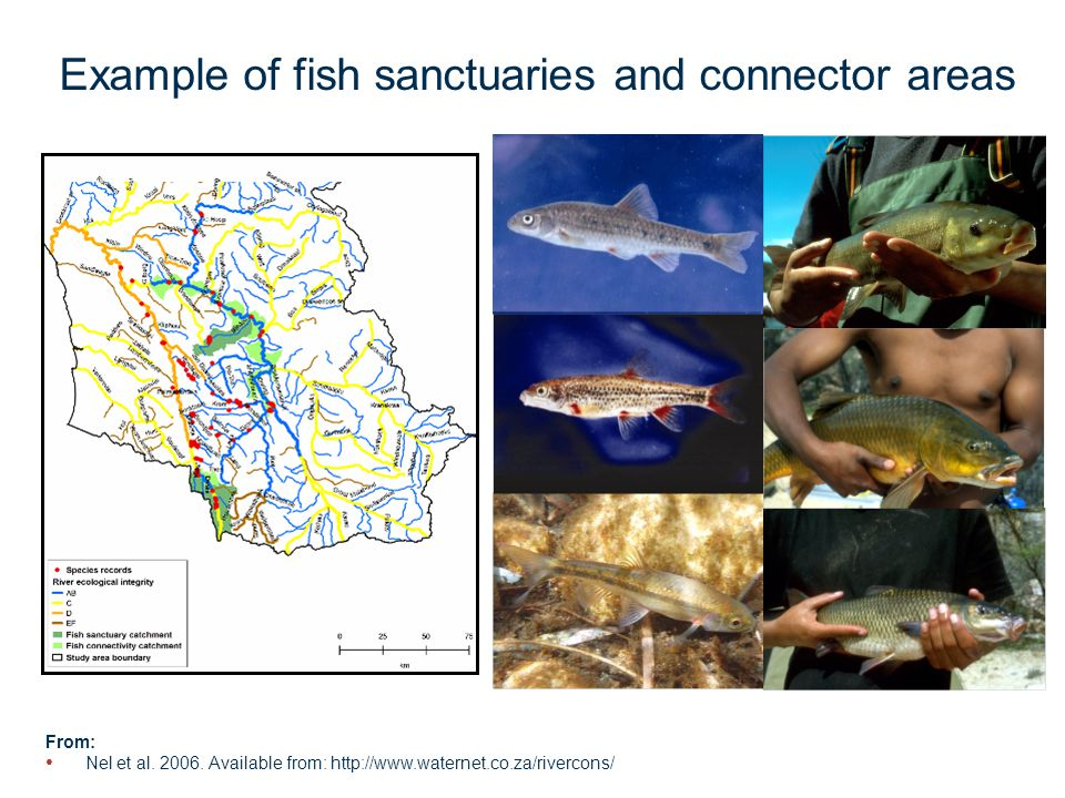 Page 15 Example of fish sanctuaries and connector areas From: Nel et al.