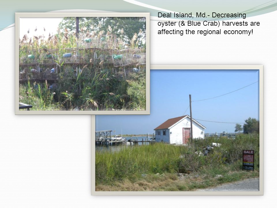 Deal Island, Md.- Decreasing oyster (& Blue Crab) harvests are affecting the regional economy!