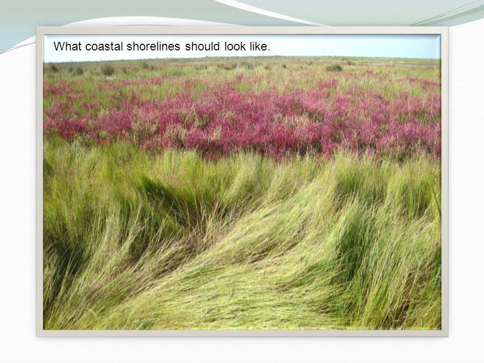 What coastal shorelines should look like.