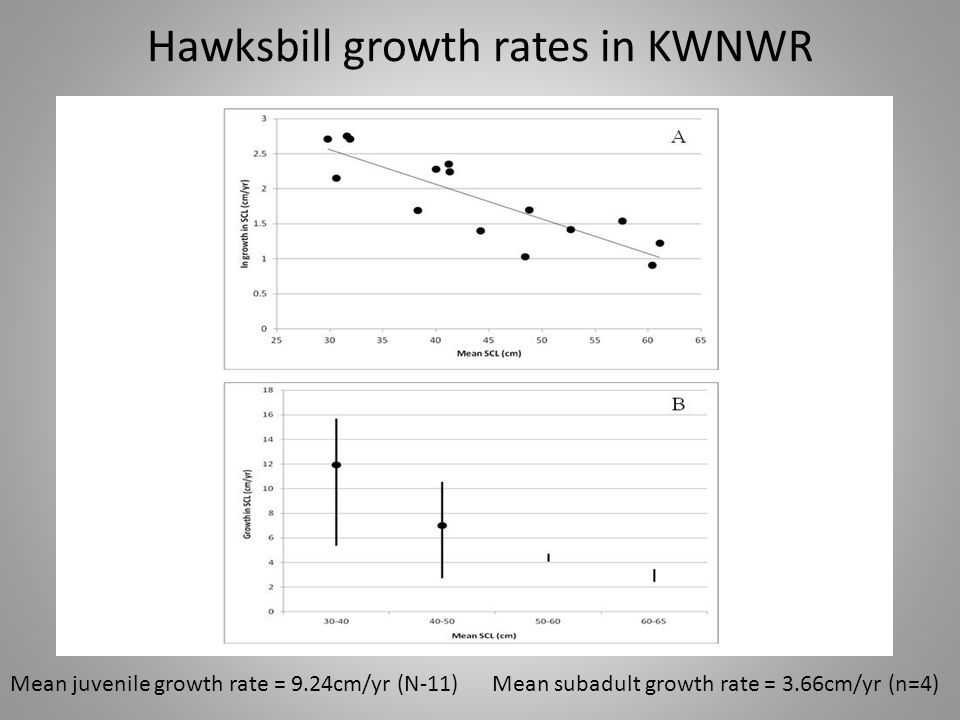 Hawksbill growth rates in KWNWR Mean juvenile growth rate = 9.24cm/yr (N-11) Mean subadult growth rate = 3.66cm/yr (n=4)