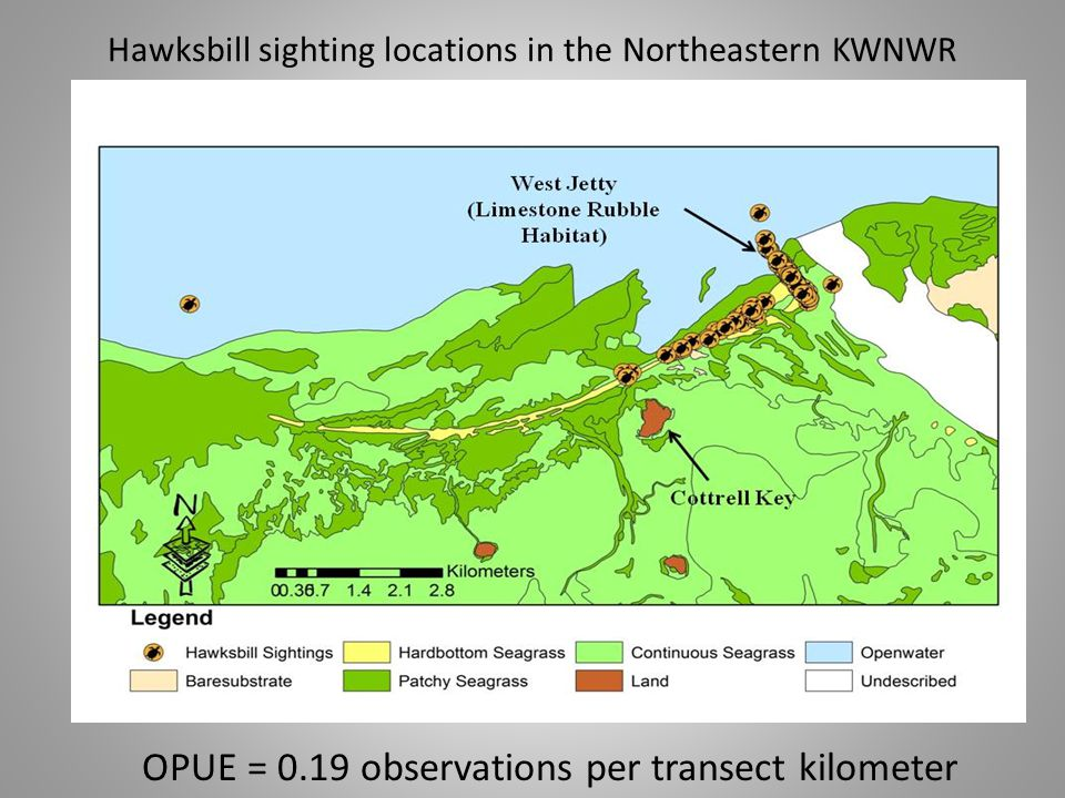 Hawksbill sighting locations in the central KWNWR OPUE = 0.02 observations per transect kilometer