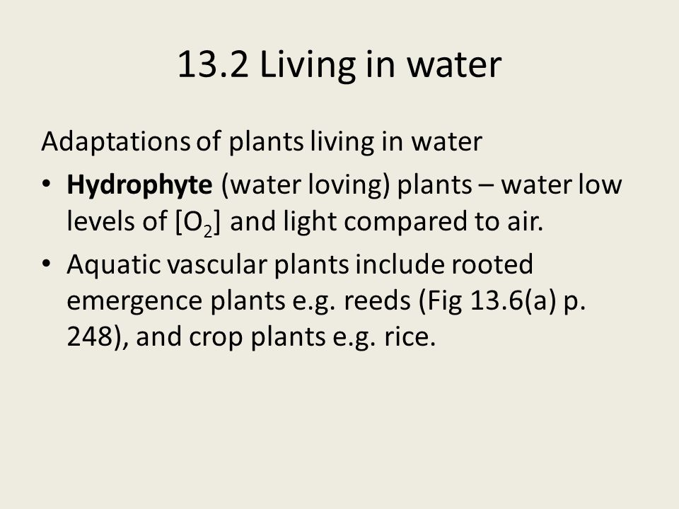 Adaptations of plants living in water Hydrophyte (water loving) plants – water low levels of [O 2 ] and light compared to air. Aquatic vascular plants