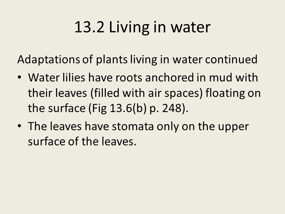 13.2 Living in water Adaptations of plants living in water continued Water lilies have roots anchored in mud with their leaves (filled with air spaces