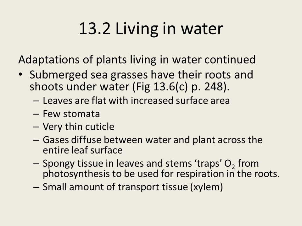 13.2 Living in water Adaptations of plants living in water continued Submerged sea grasses have their roots and shoots under water (Fig 13.6(c) p. 248