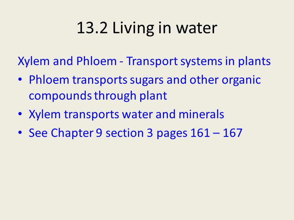 13.2 Living in water Xylem and Phloem - Transport systems in plants Phloem transports sugars and other organic compounds through plant Xylem transport
