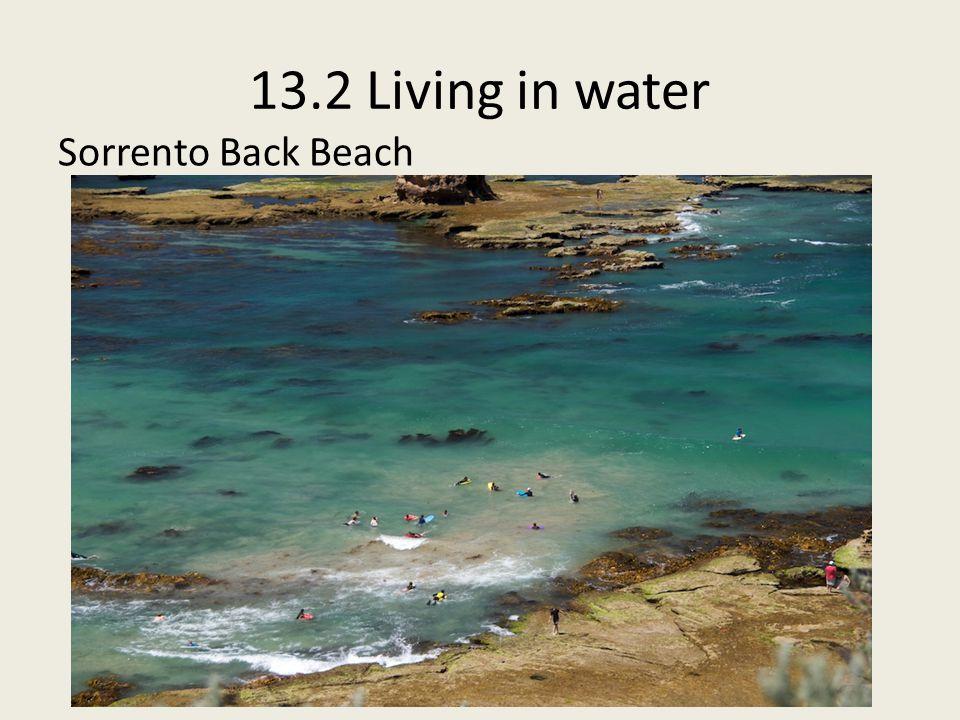 13.2 Living in water Sorrento Back Beach