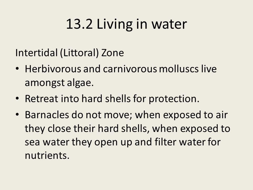 13.2 Living in water Intertidal (Littoral) Zone Herbivorous and carnivorous molluscs live amongst algae. Retreat into hard shells for protection. Barn